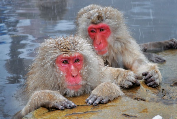 Snow Monkey Tours